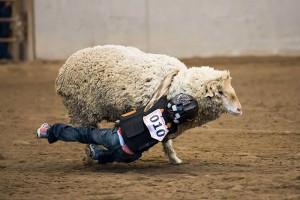 Community-Mutton-Busting