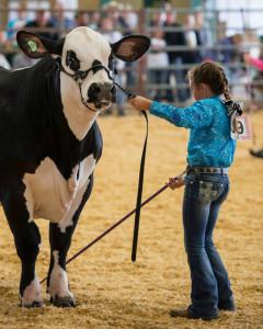 Community-Show-Cow