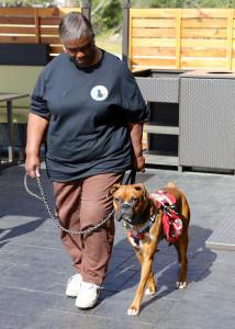 DayInLife-Dog-Walking