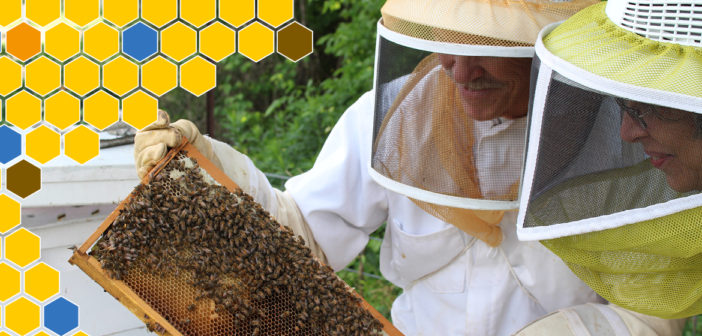 A Day in the Life: Beekeepers