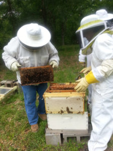 Bill Nowlin (left) and Josephine Smith inspecting hives