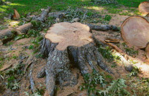 Business-Stump-Before