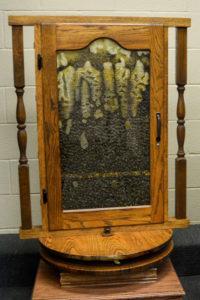 JustFun-Exhibit-Bees
