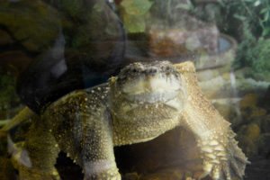 JustFun-Turtle