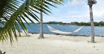 Business Focus: Palm Trees & Hammock Bound