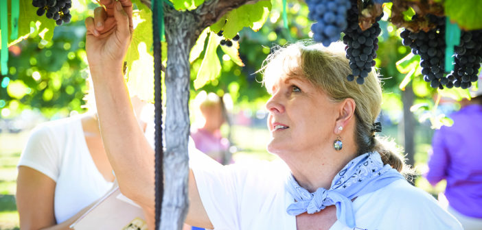 A Day in the Life: Vineyard Harvest